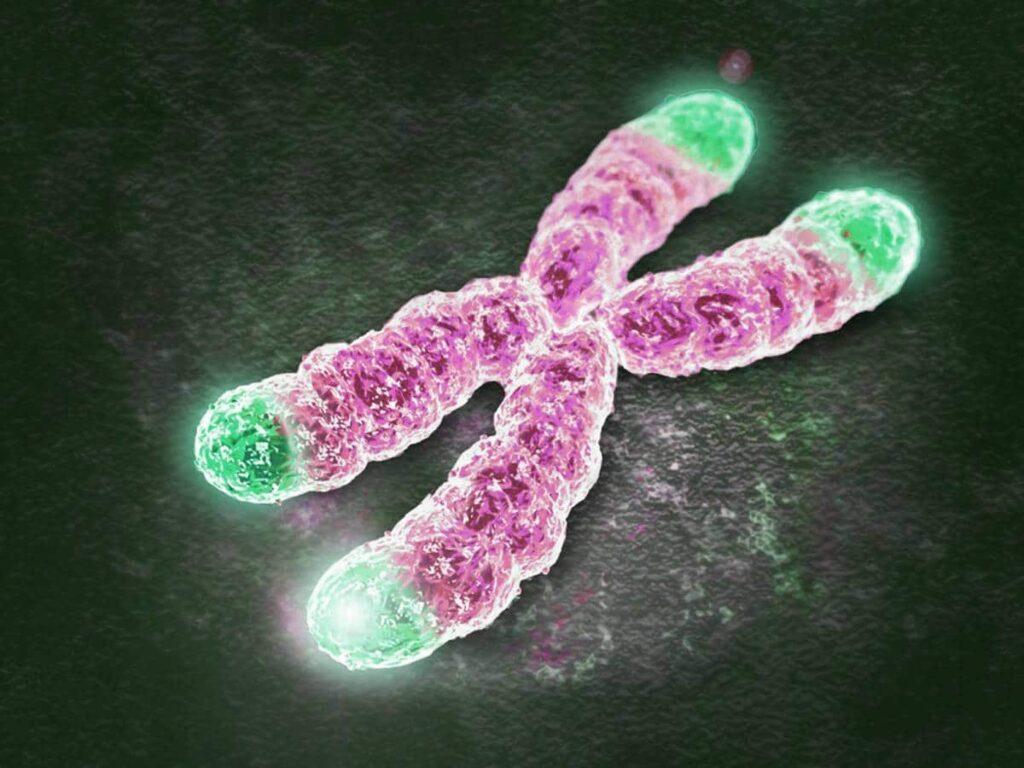 father loss telomeres